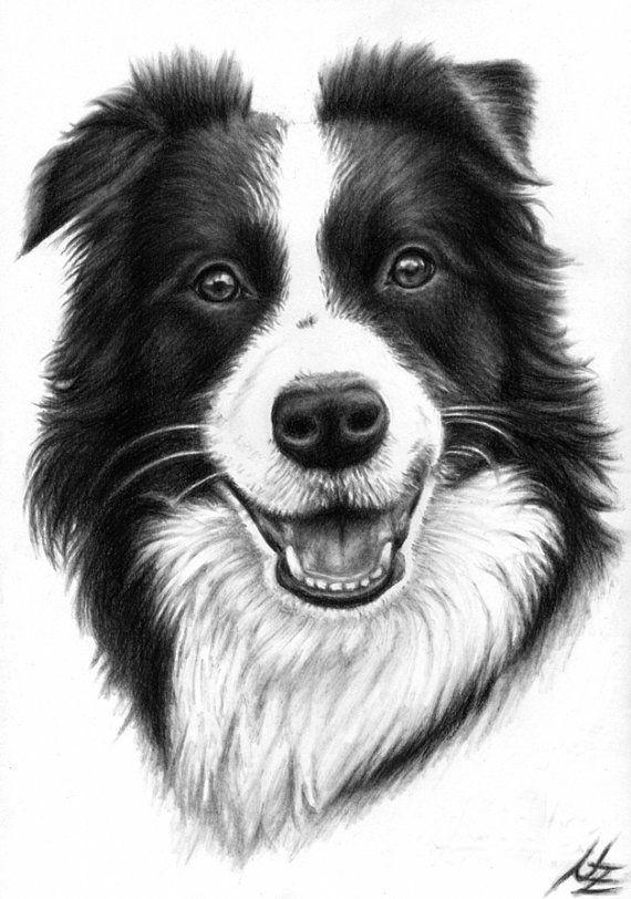 Ritratto del Border Collie - stampa 30x40cm, grande cane disegno