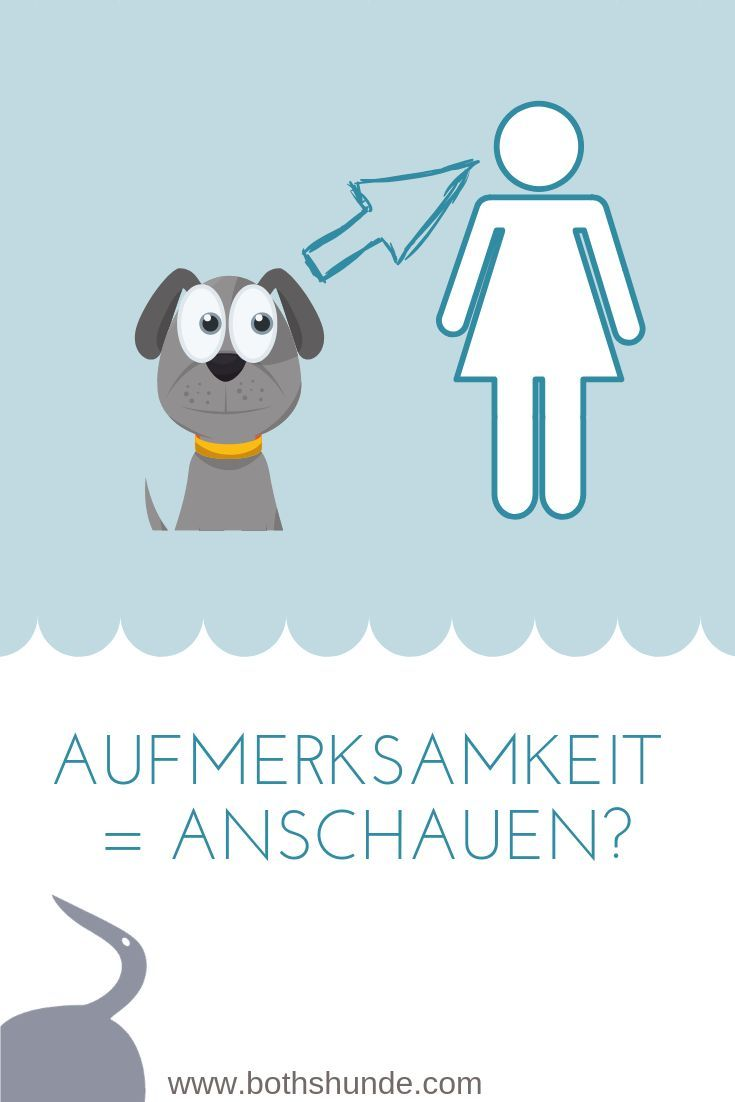 Warum Dein Hund Dich Nicht Anschauen Muss Um Aufmerksam Zu Sein
