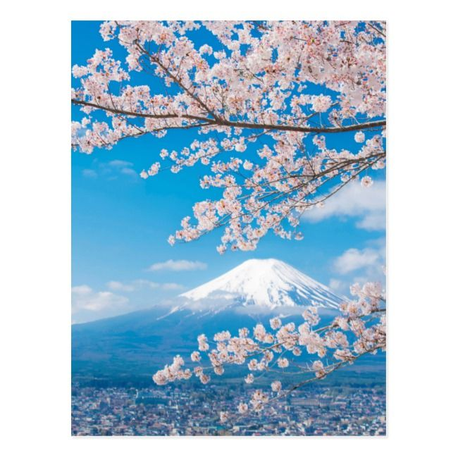View of Mount Fuji with Cherry Blossoms Postcard | Zazzle.com