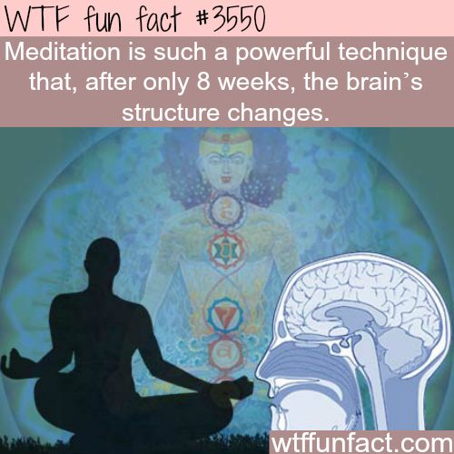 The effect of meditation on the brain - WTF fun facts