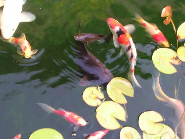 89 besten garden ponds water features bilder auf for Koi pool santa