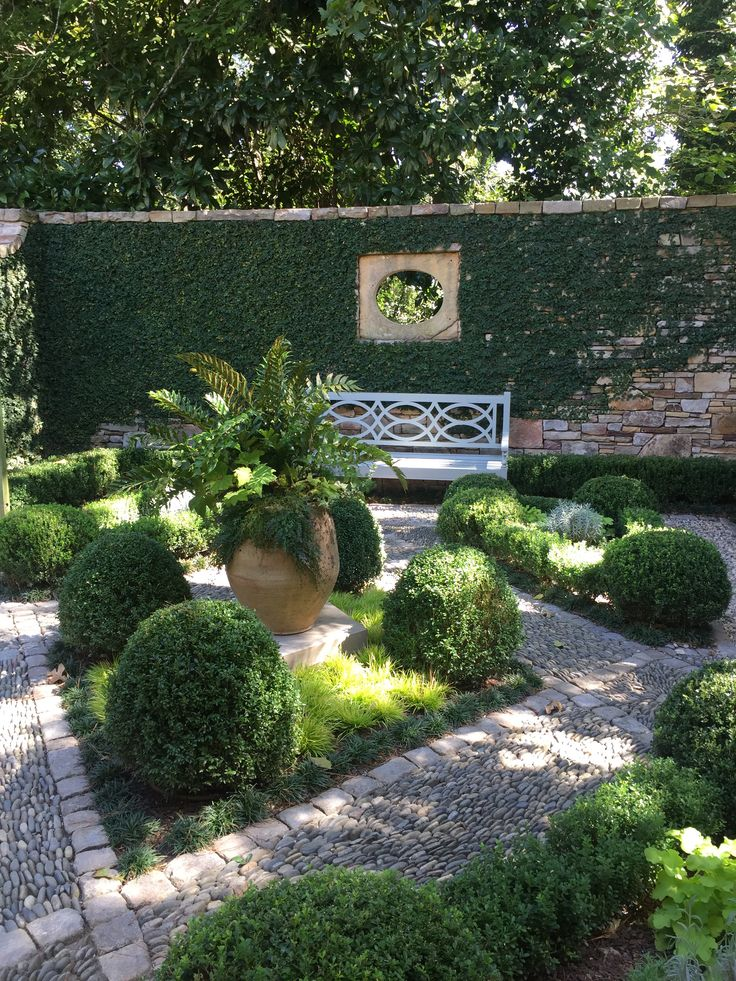 Walled courtyard garden with Boxwood and Fig Vine.