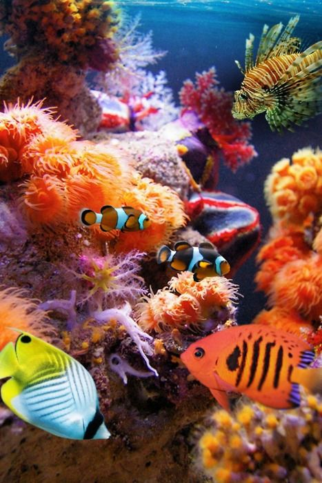 Colorful Marine Life Underwater In A Coral Reef Stock ... |Colorful Underwater Life
