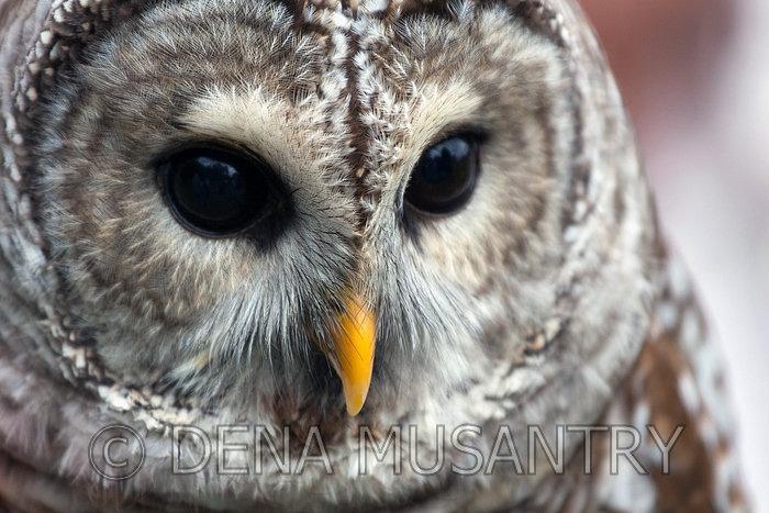 bard animal - photo #22