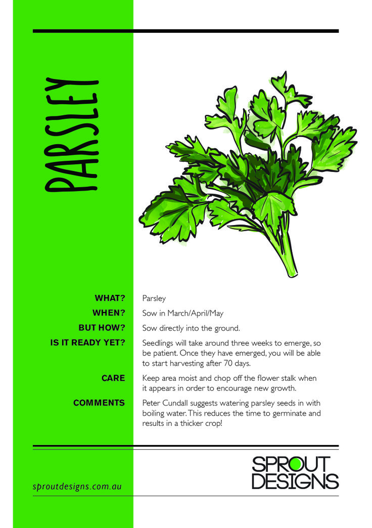 How to grow Parsley!