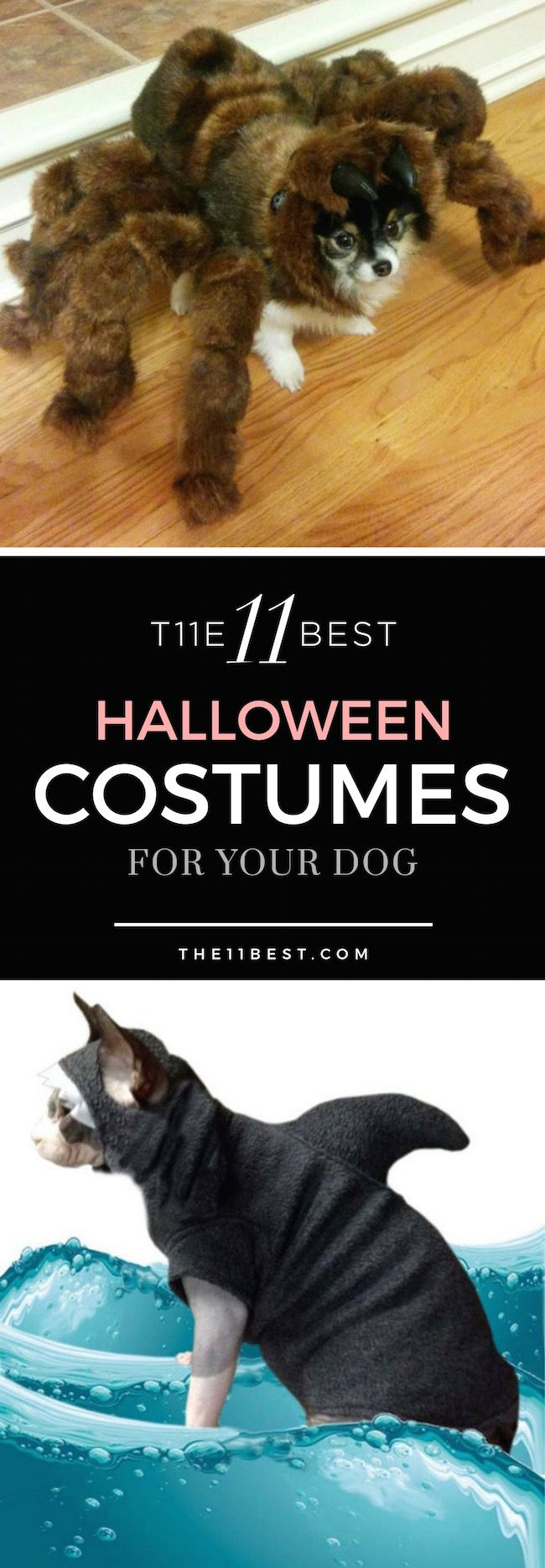 The 11 Best Halloween Costumes for Your Dog