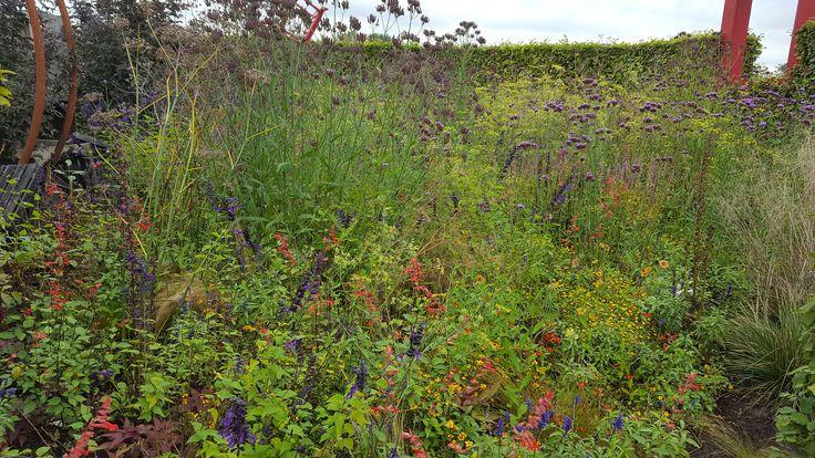 Blauw/paarse accenten, foto: Daan Buurman 04-10-16