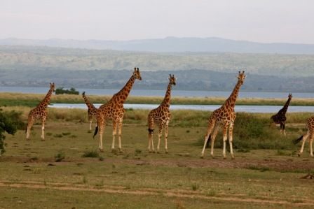 With the east African Safaris, you will get to enjoy a blend of nature and exciting tourist sites in Kenya, Uganda and Tanzania as well as Rwanda
