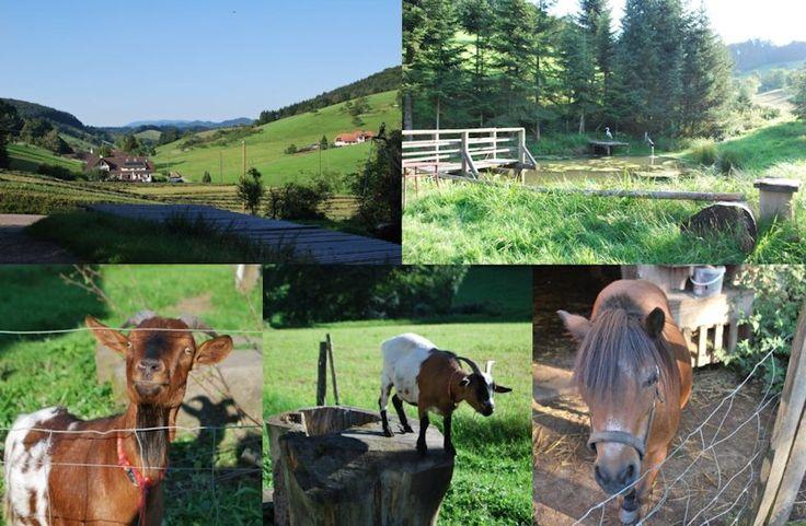 Schwarzwald Kinzigtal Ferienwohnungen, ein originaler, lebendiger Bauernhof mit Tieren in schönster Umgebung