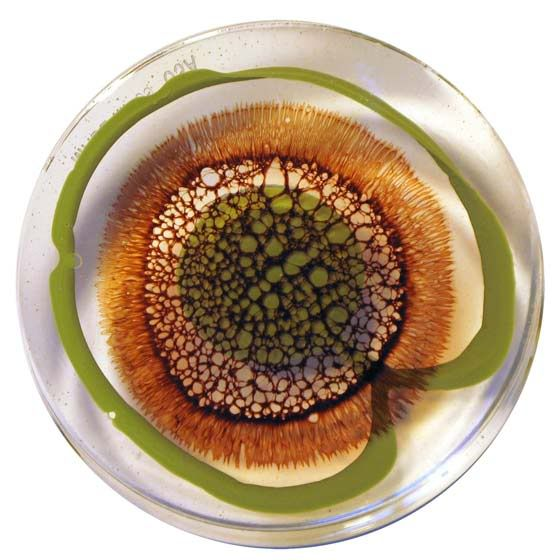 Petri Dish Art by Klari Reis  Check out her website http://www.klarireis.com/   Really cool stuff!