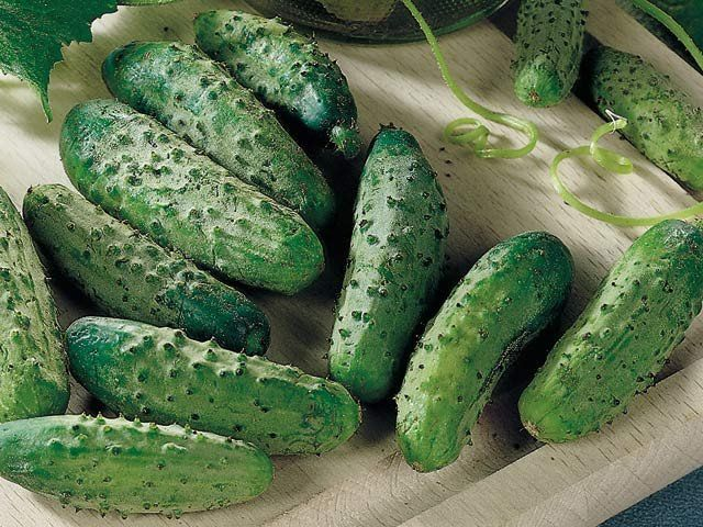 National Pickling Cucumber - Cucumis Sativus - 20 Seeds