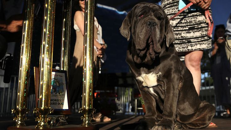 The World's Ugliest Dog Isn't That Ugly
