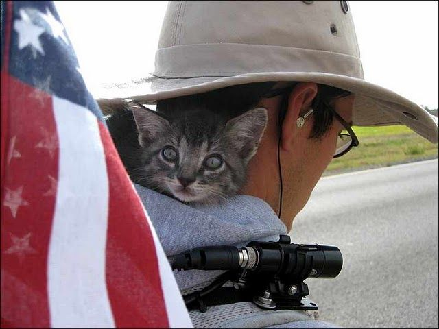 all American cat