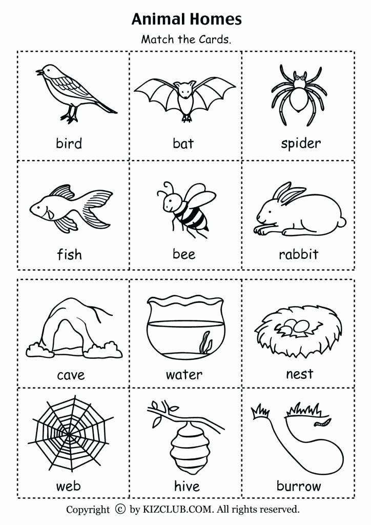 5 Senses Kindergarten Worksheets 5 Senses Worksheets Five Senses Worksheets Name 5 Sense In 2020 Preschool Science Animal Habitats Kindergarten Science