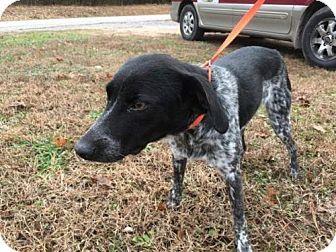 Hagerstown, MD - Australian Cattle Dog/Mountain Cur Mix. Meet Anna George, a dog for adoption. http://www.adoptapet.com/pet/17247885-hagerstown-maryland-australian-cattle-dog-mix