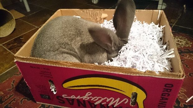 How to make a digging box for your rabbit - safe materials. Could also add hay amongst digging material.