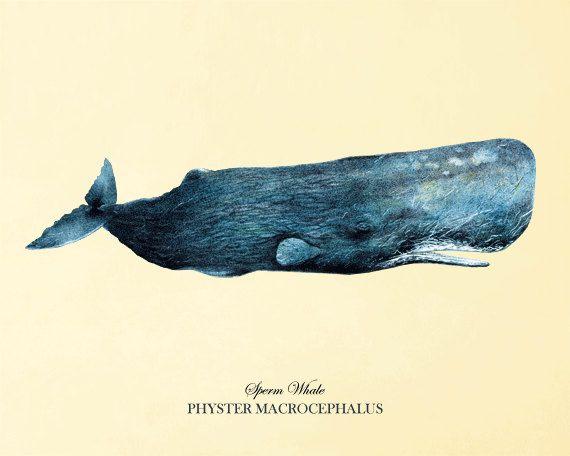 Blue Whale art print antique prints Sea art by VictorianWallArt, $10.00