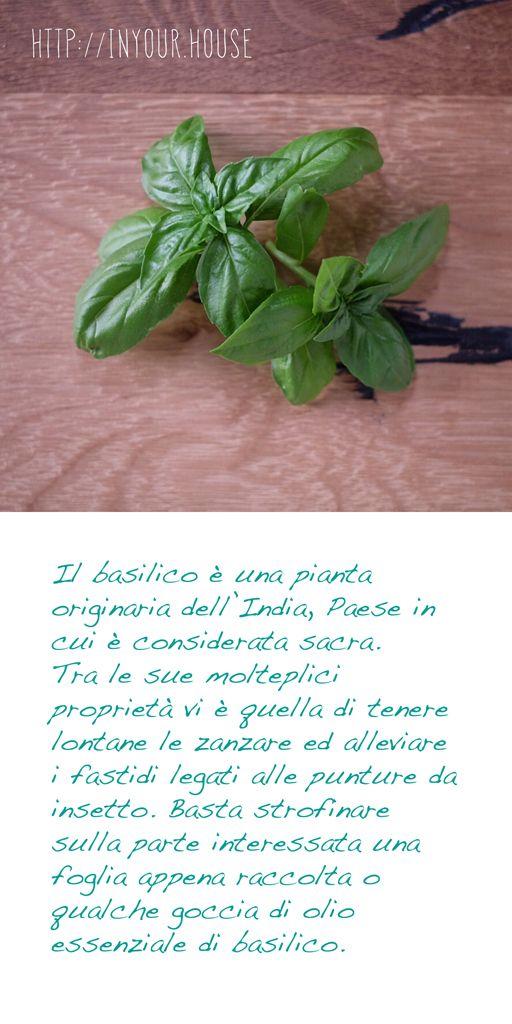 Usi alternativi delle #erbe aromatiche. Il #basilico. #consigli #guida #cucina #casa #ricetta