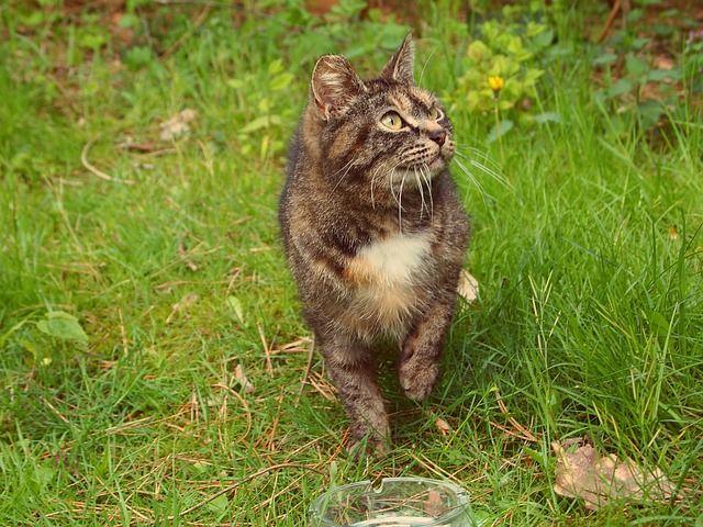 Kot w swoim naturalnym środowisku.