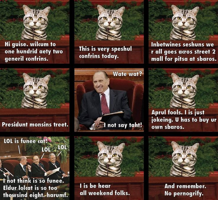 LOL cat: Cat Lds, Lol Cats, Witty Images, Ex Mormon, Conference Memes, Eldur Lolcat