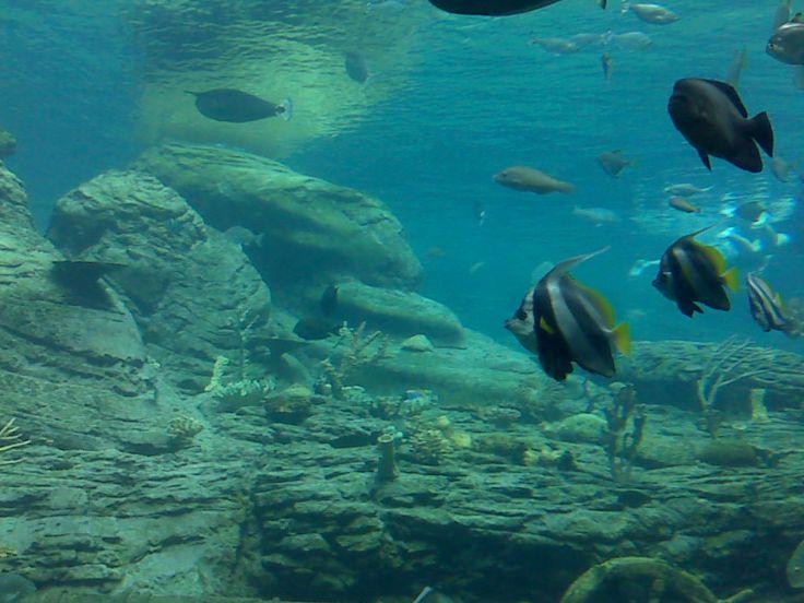 uShaka Marine World . . .Durban, South Africa