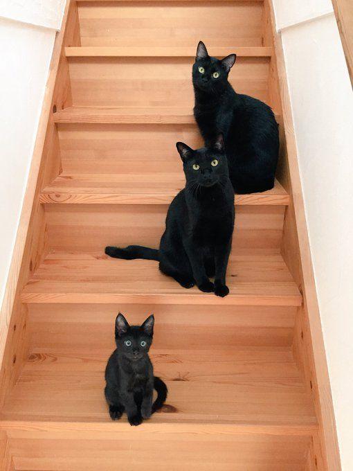 階段に降臨した黒い三連星な猫さんに勝てない人が続出中「むしろ倒されたい…」 - Togetterまとめ