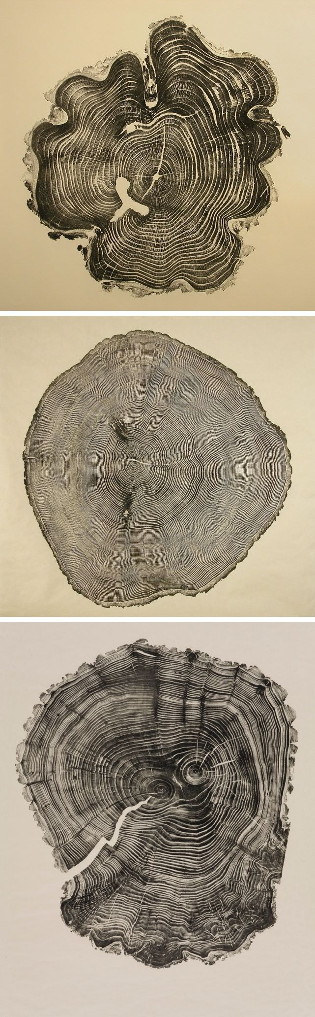 Honey Locust, Southport Oak, & Willow ~ woodcuts by Bryan Nash Gill: