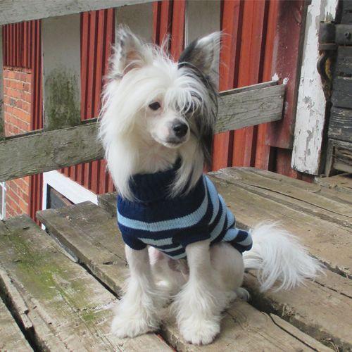 Neule Poolo sininen Pienen koiran neule. Hihaton. Käännettävä kaulus. Ehdoton suosikki! Menee esim. puvun/sadeasun alle mukavasti. - See more at: http://somemore.fi/tuotteet.html?id=7/72#sthash.yc2GMBPg.dpuf