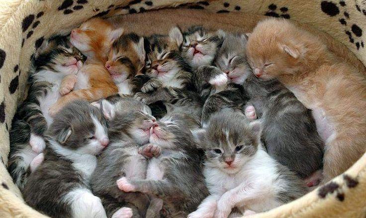 Gattini a Foligno - Kijiji: Annunci di eBay