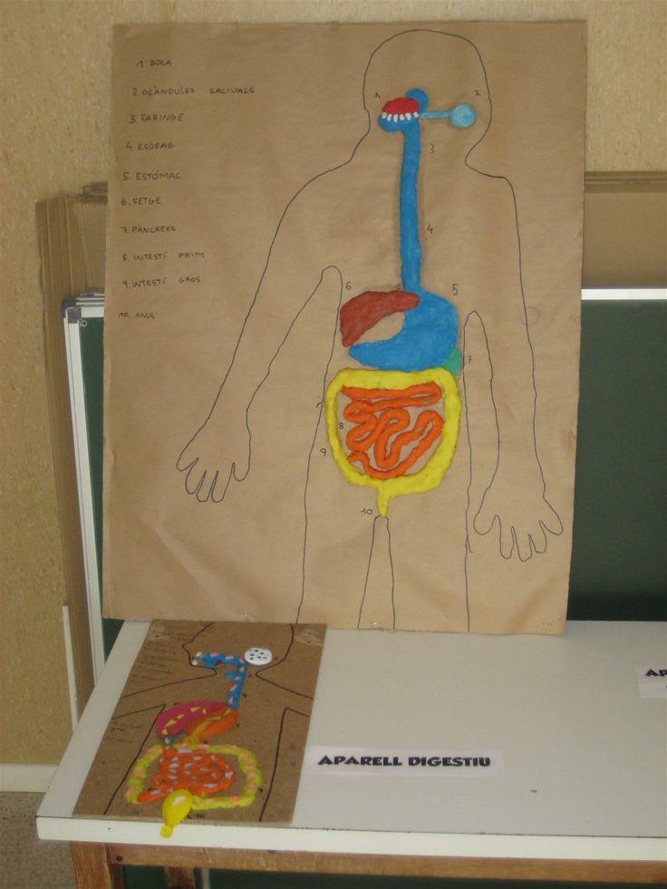 Maqueta de l'aparell digestiu realitzada pels alumnes de 5è de l'escola Ginebró