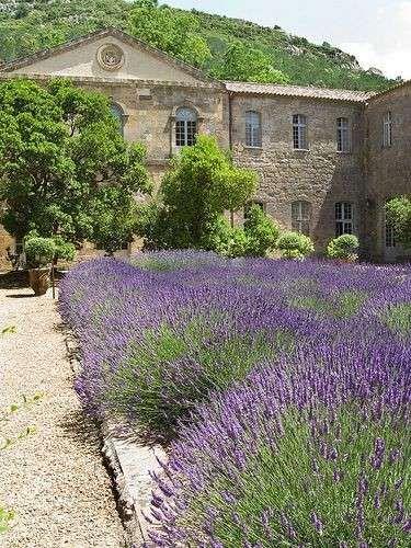 Pergolato rustico per arredare un giardino in stile provenzale.