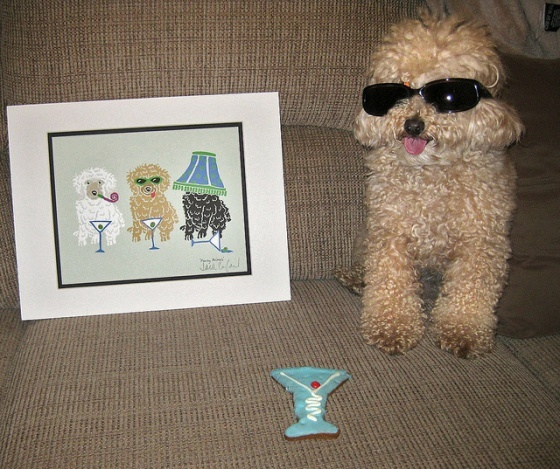 Like, Woof. That's my toy poodle, Emmett!!!