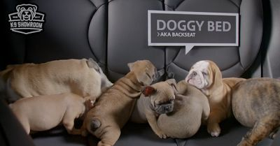 La nueva campaña de la conocida marca automotriz MINI (propiedad de BMW) decidió utilizar a lindos perritos para promover la compra de sus autos usados y además, la adopción de los peludos que forman parte de esta tierna y original publicidad.