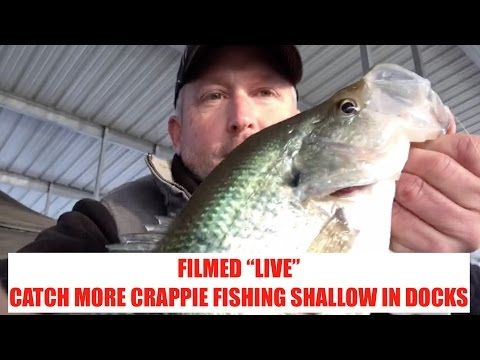 728 best fishing videos images on pinterest crappie for Crappie fishing secrets