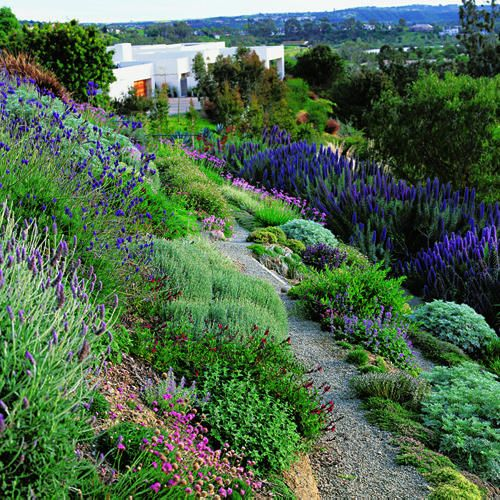 Side yard plant ideas -  lavender, pride of Madeira salvias, and pink society garlic.