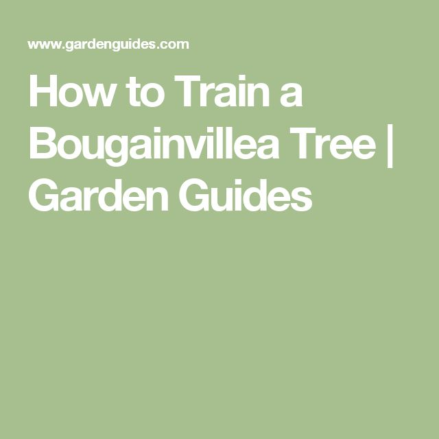 How to Train a Bougainvillea Tree | Garden Guides