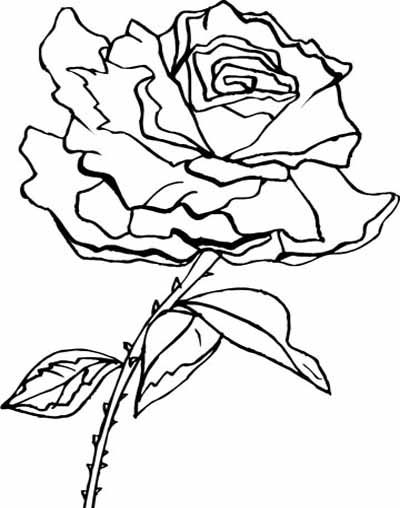 201 best Flower coloring pages images on Pinterest Coloring