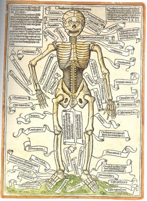 Anathomia ossium corporis humani, Hieronymus Brunschwig, 1497.: Corpori Humani, Ossium Corpori, Maps Human, Medical Curio, Anathomia Ossium, Antiques Anatomy, Human Skeletons, Human Body, Science Books