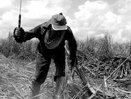 Obtida através da Lei de Acesso à Informação (LAI) pela ONG Repórter Brasil, coordenada pelo jornalista Leonardo Sakamoto, a ''Lista de Transparência sobre Trabalho Escravo Contemporâneo'' traz dados de empregadores autuados em decorrência de caracterização de trabalho análogo ao de escravo.