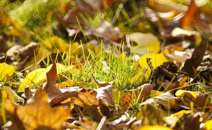 Damit der Rasen in Ihrem Garten ohne Schäden durch den nächsten Winter kommt, braucht er im Herbst noch etwas Pflege und einen speziellen Dünger. Mit diesen Tipps ist der grüne Teppich gut für die nächste Sason vorbereitet.