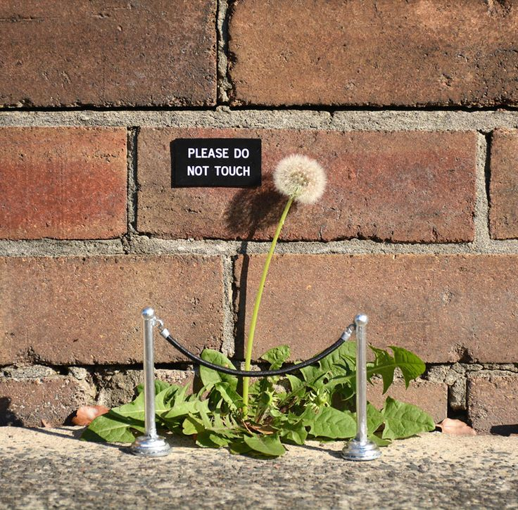 Artist Michael Pederson leaves clever little works of art around the city that seem to carry on a conversation with whomever happens to find them. From mock gallery placards to solemn proclamations his works of art are little bites of humor that will brighten your day.
