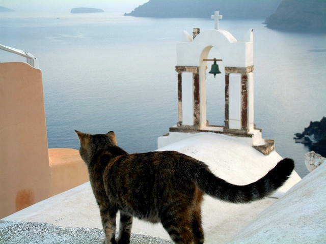 Greece -- The cat ...... , in Oia (Santorini island)
