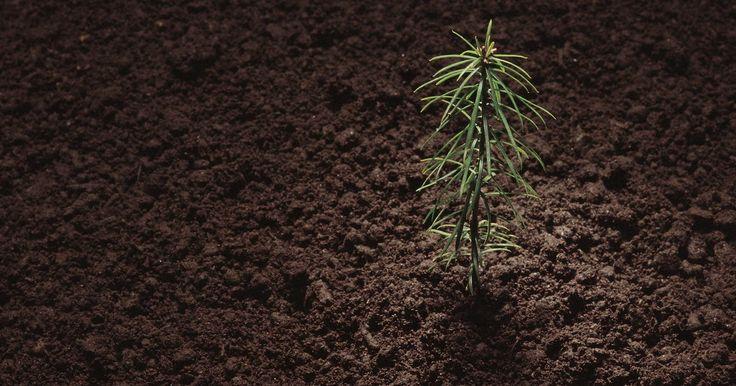 Cuatro tipos de conservación del suelo. El suelo es uno de los recursos más importantes. Dependemos de un buen suelo para la agricultura, los sistemas de filtración y la protección contra los elementos dañinos. Debido a que el uso excesivo de la tierra, hoy en día la erosión del suelo es un problema global, pero todos podemos aprender cómo protegerlo y ayudar a mantener a nuestro ...