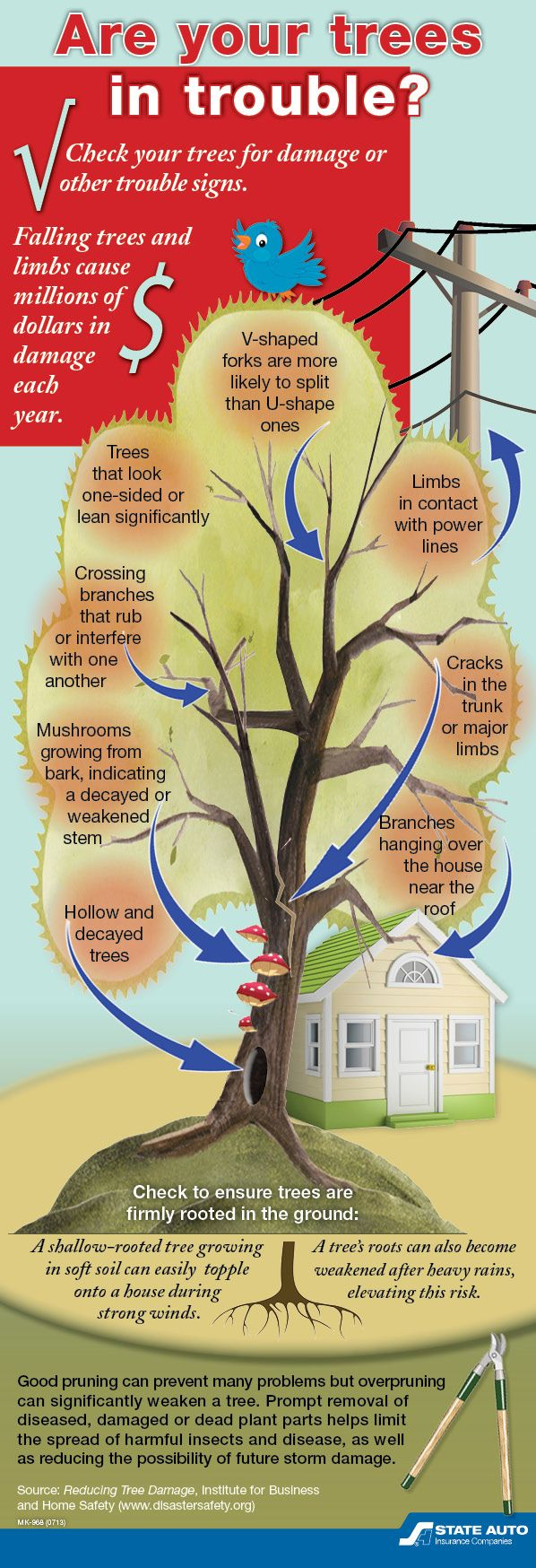 Some trees are more prone to storm damage than others.  How to check your trees for damage or trouble signs.