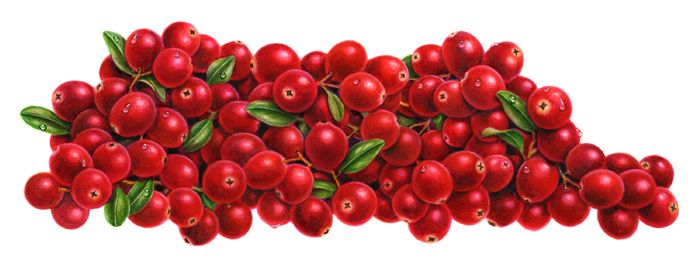 And Drawig Apples Cranberries