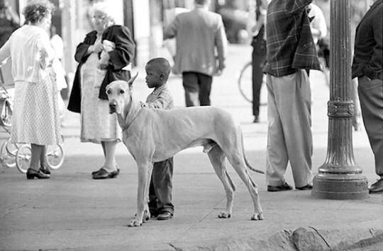 George S. Zimbel - Black Boy & Great Dane, Harlem 1962 #George Zimbel#Harlem#street photography#an aesthetics of everyday life#African American#kid#Dane#proportions#cuteness#respectability (look at those pants!)#curb#pavement#dog#childhood