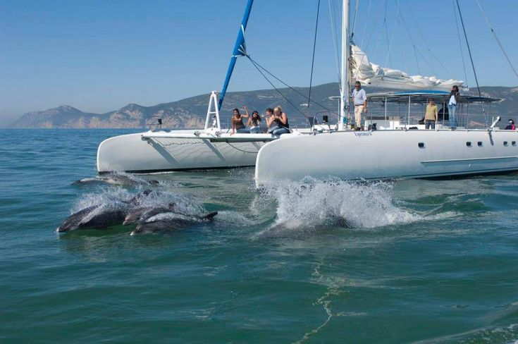 Wild dolphins in the Sado River – only 30 min from Lisbon