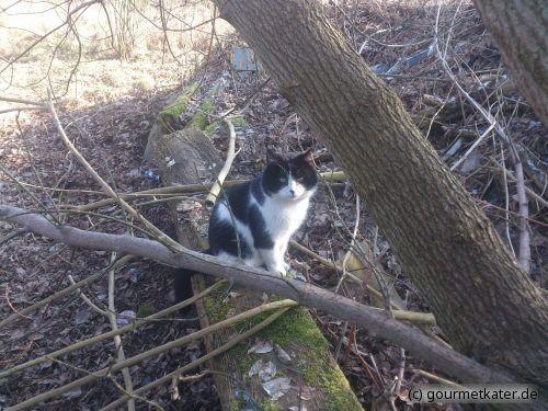 Kater Teddi #katze #cat