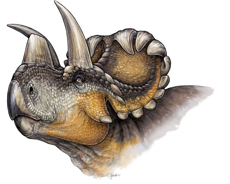 The Wendiceratops Marks Start Of Evolution Nose Horns In Group That Includes Triceratops