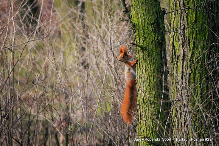 Tam, gdzie nie tylko wiewiórki nam kibicują http://biegaczamator.com.pl/?p=16175 fot Jarek Koperski